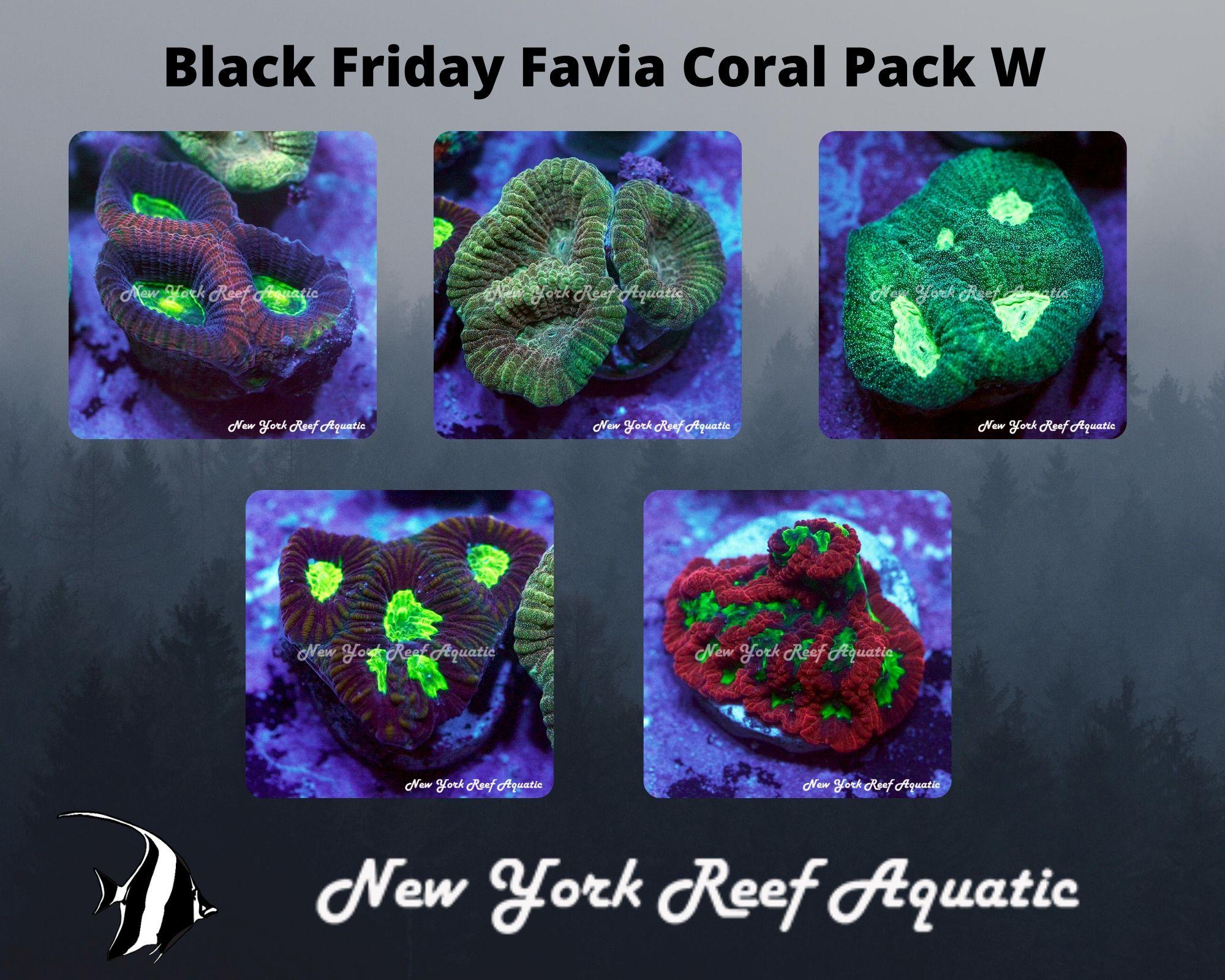 Favia Coral Pack W.jpg