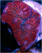 RedPanther.jpg