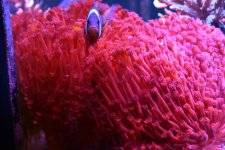 RED GONI0111.jpg