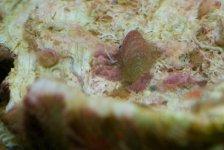 clam1.jpg