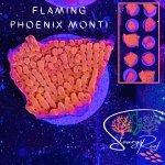 Flaming Phoenix Monti.jpg