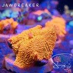 Jaw Breaker.jpg