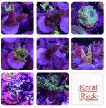 20 - Coral Pack #1.jpg