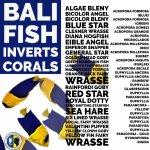 bali fish.jpg